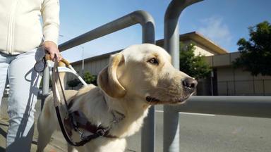 Vom Welpen Zum Blindenhund - Vom Welpen Zum Blindenhund