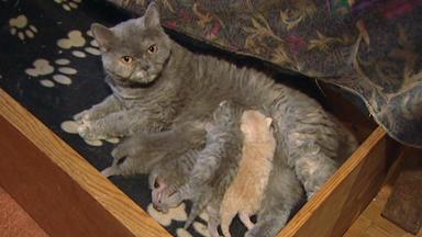 Wildes Kinderzimmer - Katzen Mit Locken