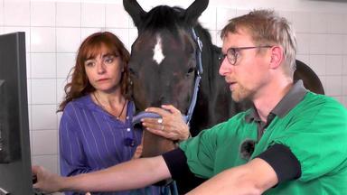 Hundkatzemaus - Thema U.a.: Prominenter Besuch Beim Pferdezahnarzt