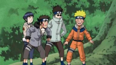 Naruto - Der Käfer Mit Dem Besonderen Geruchssinn
