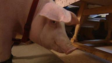 Wildes Kinderzimmer - Schweinegut