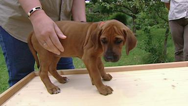 Wildes Kinderzimmer - Wesenstest Für Hunde