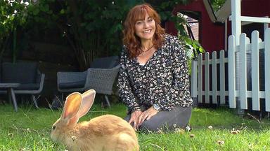 Hundkatzemaus - Thema U.a.: Ein Spielplatz Für Kaninchen