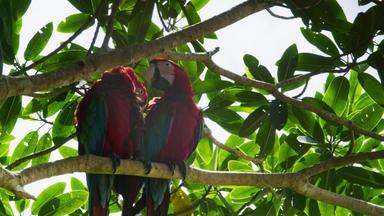 Expedition Amazonas - Ein Wald Voller Liebe