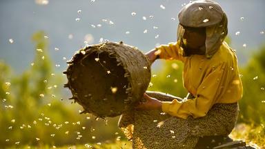 Land Des Honigs - Ab 9.10. - Land Des Honigs