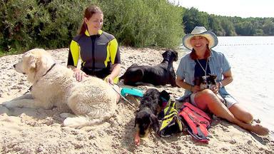 Hundkatzemaus - Thema U.a.: Hunde-schwimmwesten