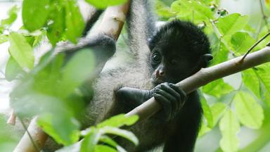 Expedition Amazonas - Kinder Des Dschungels