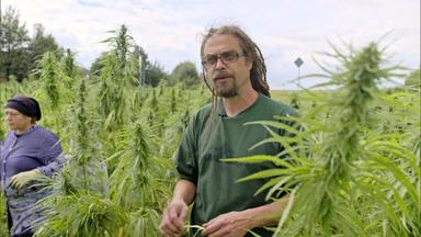 Die Rtl Ii-dokus - Cannabis - Droge Oder Wundermittel?