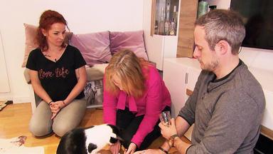 Hundkatzemaus - Thema U.a.: Ein Neuer Fall Für Vox Katzenexpertin Birga Dexel