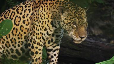 Expedition Amazonas - Tödliche Jäger