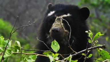 Das Reich Der Brillenbären - Das Reich Der Brillenbären