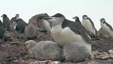 Wilde Antarktis - Eisige Inseln
