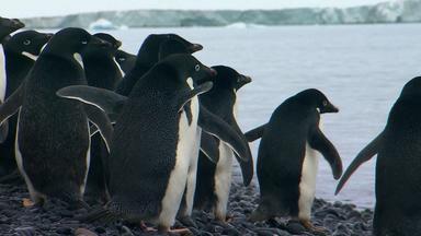 Wilde Antarktis - Meereströmungen