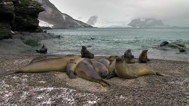 Wilde Antarktis - Jahreszeiten