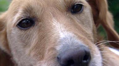 Wildes Kinderzimmer - Tierhilfe, Trennung Und Viele Tränen