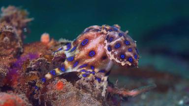Wunderwelt Pazifik - Great Barrier Reef