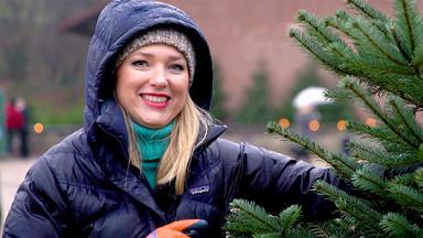 Auto Mobil - Thema Heute U.a.: Wie Transportiert Man Einen Weihnachtsbaum?