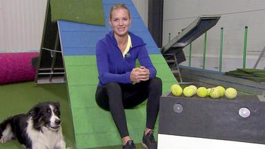 Hundkatzemaus - Heute U. A.: Hundesportarten Extrem: Flyball!