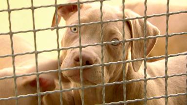 Harte Hunde - Heute: Ausnahmezustand Im Tierheim Freital