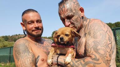 Harte Hunde - Heute: Rettung Für Das Pfötchenparadies In Nümbrecht