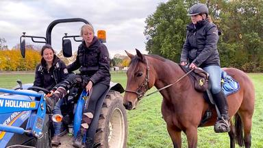 Die Pferdeprofis - Heute U.a.: Stute Marie Hat Panische Angst Vor Fahrzeugen