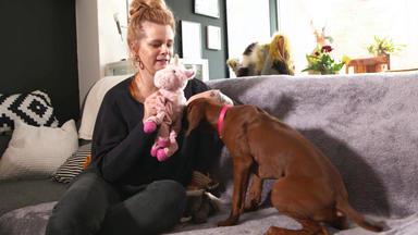 Hundkatzemaus - Thema U.a.: Hundespielzeuge Im Test
