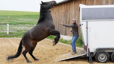 Die Pferdeprofis - Heute U.a.: Pura Raza Espanola \