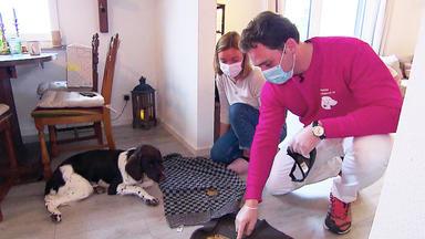 Hundkatzemaus - Thema U.a.: Auf Achse Mit Dem Mobilen Tiernotdienst
