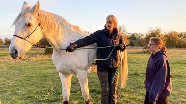 Die Pferdeprofis - Heute U.a.: \