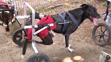 Hundkatzemaus - Thema U.a.: Zu Gast Am Gnadenhof \