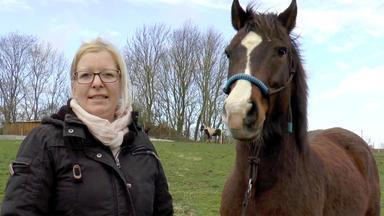 Die Pferdeprofis - Heute U.a.: Welsh-knabstrupper-mix Felix Unter Dauerstress