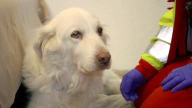 Tierretter Mit Herz - Schockdiagnose Bei Einem Hund In Essen