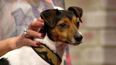 Wir Lieben Tiere - Die Haustiershow - Hündin Lilly Ist Eifersüchtig