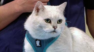 Wir Lieben Tiere - Die Haustiershow - Kater Leo Prügelt Sich Ständig