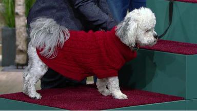 Wir Lieben Tiere - Die Haustiershow - Hund \