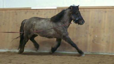 Tierretter Mit Herz - Schwere Diagnose Für Ein Pferd