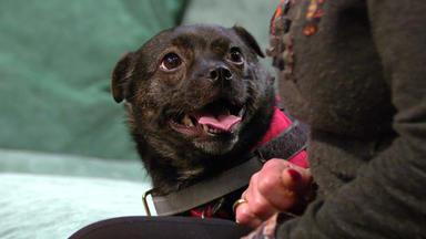 Wir Lieben Tiere - Die Haustiershow - Hündin Camy Ihrer Halterin Renée Ständig Den Rücken Zu