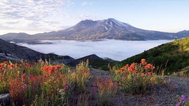 Wildes Nordamerika - Am Fuß Des Vulkans