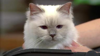 Wir Lieben Tiere - Die Haustiershow - Kater Mitschu Niest Viel