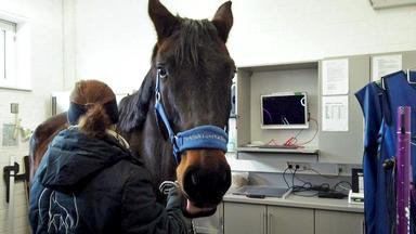 Tierretter Mit Herz - Fußentzündungen Bei Einem Hengst