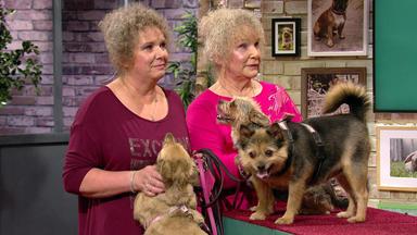 Wir Lieben Tiere - Die Haustiershow - Romy Und Nora Kläffen Jedem Zweirad Hinterher