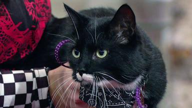 Wir Lieben Tiere - Die Haustiershow - Kater Shane Ist Immer Hungrig