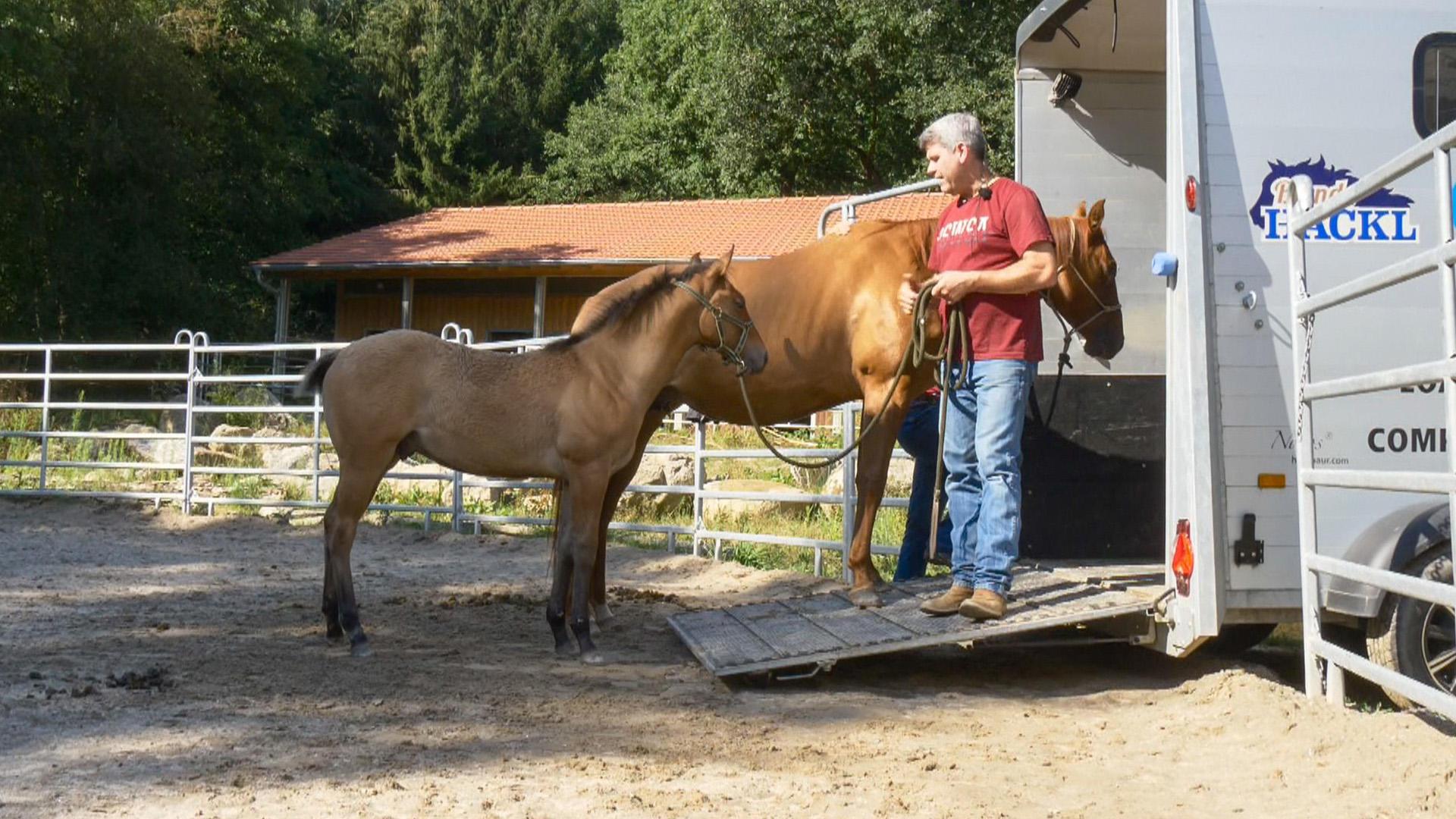 "Heute u.a.: Fohlen ""Cowboy"" | Folge 8"