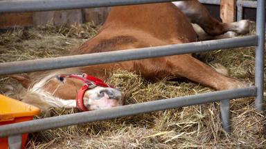 Tierretter Mit Herz - Ein Regungsloses Pferd