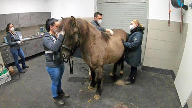 Tierretter Mit Herz - Zwölfjähriger Wallach Mit Rückenproblemen