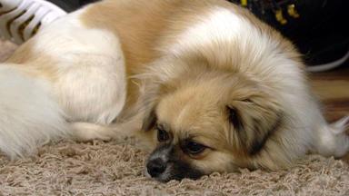 Wir Lieben Tiere - Die Haustiershow - Mischlingshund Bammy Hat Probleme Baby Liam Zu Akzeptieren