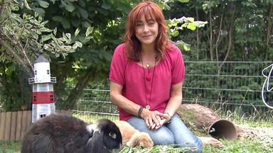 Hundkatzemaus - Thema U.a.: Kaninchen