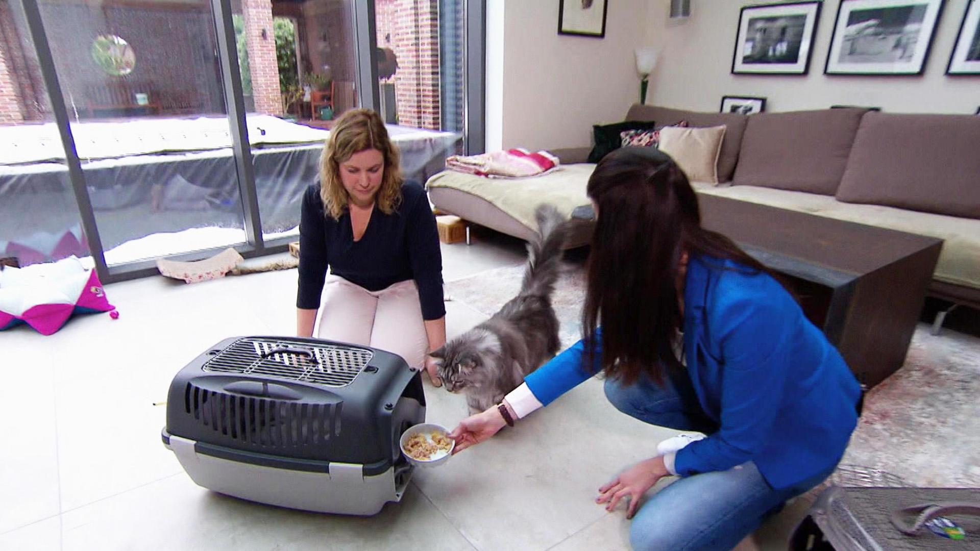 Heute u.a.: Cat to the Vet! Tierarzttraining für Katzen | Folge 14