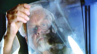 Anwälte Der Toten - Leiche Ohne Kopf \/ Prostituiertenmord Nach 22 Jahren Aufgeklärt