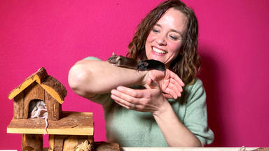 Hundkatzemaus - Thema U.a.: Mäusetisch Statt Gehege